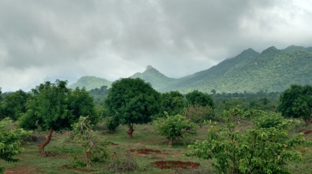 Sri farm scenery